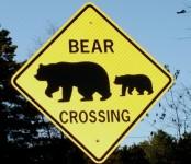 Bear Crossing