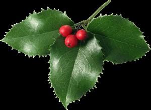 mistletoe leaves