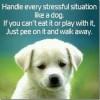 Stress Puppy