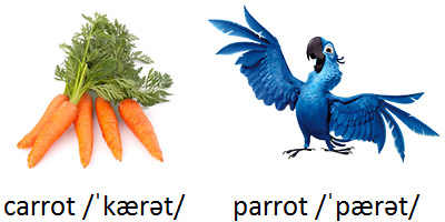 carrot and parrot