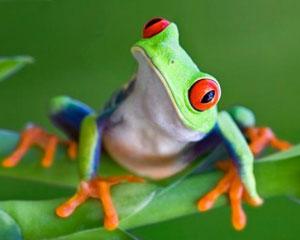 Amphibians1