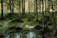 nature-6