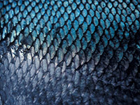 Орнамент в виде чешуи рыбы